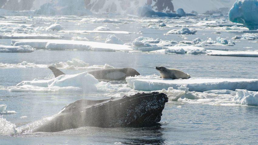 La baleine et le phoque